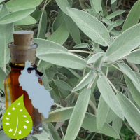 salie-salvia_officinalis_olie-bio