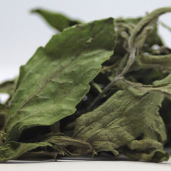 honingkruid_-stevia_rebaudiana_leaves_dry